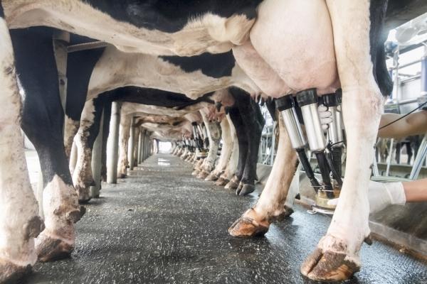 Origine obbligatoria in etichetta per latte e formaggi